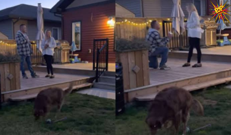 Man proposes to girl in a viral video, but their pet takes away the spotlight, know more: