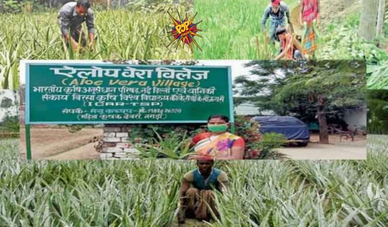 Aloe Vera Village:  In This Indian Village Everyone cultivate the Aloe Vera plants in courtyard, field. See pics: